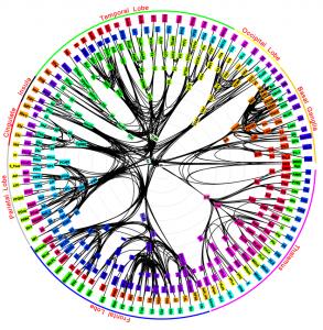 """""""El Mandala del Cerebro"""". Conexiones de larga-distancia del cerebro del mono."""