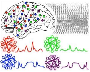 La ilustación muestra como los ritmos del cerebro organizan grupos distribuidos de neuronas para funcionar como células ensambladas.