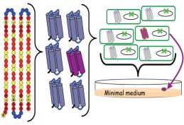 Diseño de una colección de proteínas nuevas