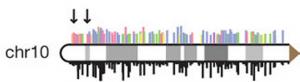 Distribución de Svs en el cromosoma 10