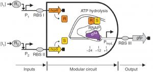 Compuerta de ADN construida en la bacteria E-coli