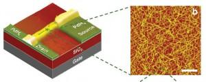 Transistor de efecto de campo biocompatible fabricado con nanofibras de maleic-chitosan