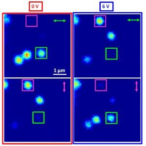 Las flechas indican la polarización de luz detectada, ya sea en paralelo o perpendicular al compuesto de electrodos.