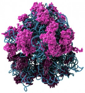 Contenido del ribosoma (Crédito: Dale Muzzey/UCSF)
