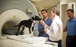 Callie utiliza protección para su oído al tiempo que se prepara para entrar al escáner (Crédito: Bryan Meltz)