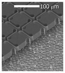 Prótesis fotovoltaica de retina -una hoja flexible de silicio que puede ser convertir luz en señales eléctricas que pueden ser detectadas por las neuronas del ojo.  La foto con microscopio de electrones muestra el implante en un ojo de cerdo (Crédito: Nature Photonics/Stanford)
