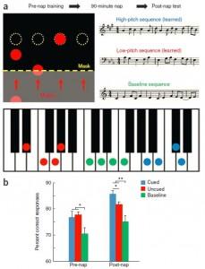 (a)El participante aprendió a ejecutar melodías con cuatro dedos de su mano izquierda mientras observaba círculos que indicaban que tecla presionar. Después de pruebas de aprendizaje, la cantidad de información ofrecida se reducía por medio de un enmascaramiento de la imagen mostrada (aquí se muestra transparente). Se practicaron dos melodías repetidamente (roja y azul). Melodías base (verde) se ejecutaron durante períodos de prueba antes y después de la siesta. ya fuera la melodía alta o la melodía baja (ocho participantes cada una) se presentó encubierta durante la siesta. (b)Exactitud (porcentaje de respuestas correctas) se midió de acuerdo a si la tecla correcta se presionó en el tiempo apropiado. (Crédito: James W Antony, Eric W Gobel, Justin K O'Hare, Paul J Reber, Ken A Paller/Nature Neuroscience)