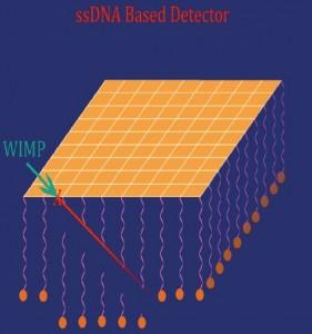 Detector de materia oscura: un WIMP (partícula de materia oscura) interacciona elásticamente con un núcleo de oro situado en una delgada lámina. El núcleo viaja cortando cadenas individuales de ADN. El lugar donde se realizó el corte puede conocerse por medio de la amplificación y secuenciación de los segmentos de ADN.
