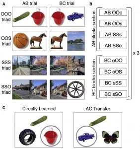Diseño experimental. (A) Estimulación de Fotos a color de objeto (O) y escena (S) se organizaron en grupos de tres estímulos (triads) presentadas en dos asociaciones superpuestas (AB y BC). Los tríos consistían de uno de cuatro posibles tipos. (Crédito: Dagmar Zeithamova, April L. Dominick, Alison R. Preston,/Neuron)