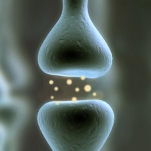 La gráfica muestra una sinapsis, conexión entre las células del cerebro (Crédito: Christine Daniloff/MIT)