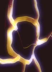 Imagen de microscopio de electrones que muestra una región circular del tejido nanoelectrónico con transistor de nanocables al centro (Crédito: Harvard University)