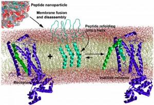 Mecanismo propuesto para nanopartículas proto-virales (crédito: Sergey G. Tarasova et al./PNAS)