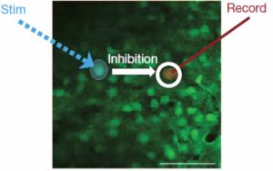 Mapa óptico de inhibición funcional de las neuronas