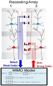 """Prótesis neuronal. La aplicación detecta un disparo de """"código débil"""" (1) de neuronas asociadas con errores relacionados con el consumo de cocaína. Esta detección es utilizada para estimular (2) otras neuronas con el patrón de """"código fuerte"""" relacionado con la decisión correcta.  (Crédito: Robert E Hampson et al./Journal of Neural Engineering)"""