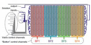 Dibujo del k-MITOMI, dispositivo microfluídico. Las líneas azules y grises representan los canales de flujo y control. Los cuatro canales de control separados (B1 a B4) se encuentran en rojo, cían, verde y amarillo. (Crédito: Marcel Geertza/PNAS)