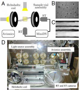 (A) Diagrama esquemático del experimento de vuelo. Las imágenes de muestra que se muestran fueron tomadas de (B) la vista de la cámara ST, que es paralela al campo externo, y la cámara (C) RT, que es perpendicular al campo. (D) El experimento en la Caja de Ciencias de Microgravedad en la Estación Espacial Internacional  (Crédito: James J. Swan et al./PNAS)