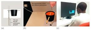 Configuración del experimento. (a) El participante sostiene un objeto con una canasta de peso colocada ya sea a su lado derecho o izquierdo.  Al momento de sostener verticalmente el objeto, el participante siente el jalón en la dirección del peso. la parte gris no era visible al participante. (b) una vista por detrás muestra la configuración del objeto hasta que el participante lo toma. (c) El participante ve una pantalla donde se muestra la imagen reflejada hacia la derecha o izquierda del objeto. La imagen simula la manera en que el objeto sería si la pantalla fuera rectangular.  (Crédito: Yangqing Xu, Shélan O'Keefe, Satoru Suzuki, Steven L Franconeri/Perception)