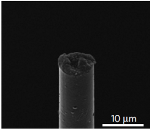 Imagen SEM de electrodo de micro-hebra funcional y completamente ensamblado. (crédito: Takashi Kozai)