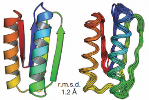 Comparación de modelos computacionales con estructuras determinadas experimentalmente: modelo del diseño (izquierda) y estructura NMR (derecha). (Crédito: Nobuyasu Koga et al./Nature)