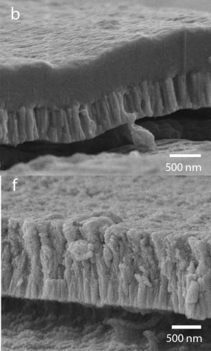 La imagen superior del microscopio de electrones (b) muestra una sección de la cubierta hydroxyapatite/YSZ bioactiva sin aplicación de calor. Nota que ambas capas lucen distintas. La imagen inferior (f) muestra la capa después de la aplicación de calor. Ahora puedes ver que las capas están integradas.  (Crédito: Afsaneh Rabiei/NC State University)