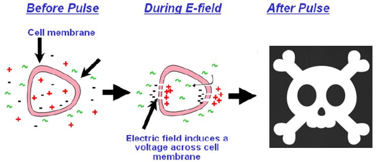 Manera en que la electroporación irreversible elimina células del tumor (Crédito: Constantinos Sofocleous, Memorial Sloan-Kettering Cancer Center)
