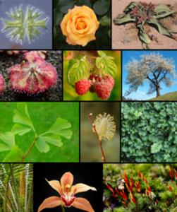 Fuentes de hidrógeno: plantas (crédito: Wikimedia Commons)