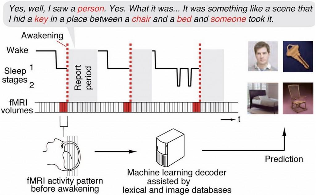 Experimento de sueño con fMRI (crédito: T. Horikawa et al./Science)