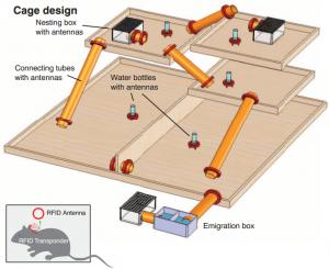 Experimento de individualización con ratones. (Crédito: CRTD/DZNE/Freund)