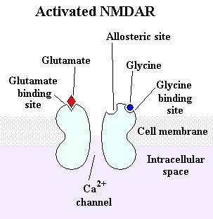 Representación de un receptor NMDA activado (crédito: Delldot/Wikimedia Commons)