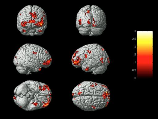 La imagen muestra las posiciones promedio de las regiones del cerebro utilizadas para identificar los estados emocionales. (Crédito: Karim S. Kassam et al./Carnegie Mellon University)