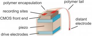 Diagrama de polvo neural (crédito: Dongjin Seo et al.)
