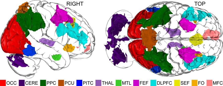 Once áreas del cerebro que muestran distintos niveles de actividad diferencial en un estudio en Dartmouth utilizando MRI funcional para medir la manera en que los humanos manipulamos imágenes mentales.  (Crédito: Alex Schlegel)