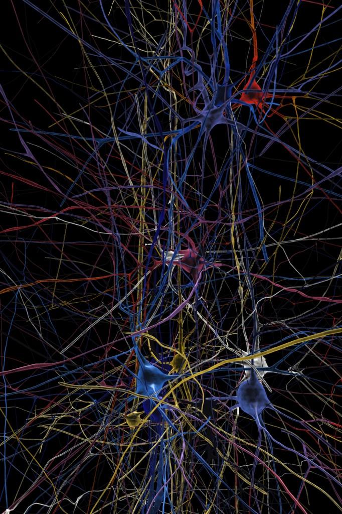 Red neuronal simulada muestra formas en 3D de células individuales (reconstruídas a partir de información de laboratorio). Las células azules están en silencio, las rojas están en actividad. (Crédito: EPFL/Blue Brain Project)