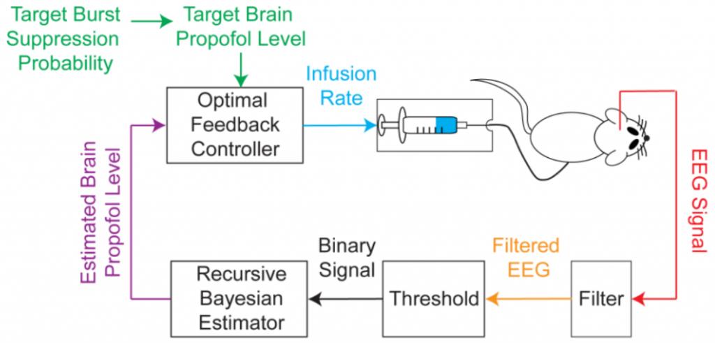 El sistema BMI graba la señal del EEG, segmenta el EGG en series temporales binarias al filtrar, calcula el BSP basado en las series temporales binarias, y luego utiliza el estimado como retroalimentación para controlar el suministro de la droga. (Crédito: Shanechi MM et al./PLoS Computational Biology)