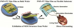 Ilustración esquemática del marcapasos artificial que hace uso de la energía eléctrica generada desde un recolector flexible de energía PMN-PT. (Crédito: Geon-Tae Hwang et al./Advanced Materials)