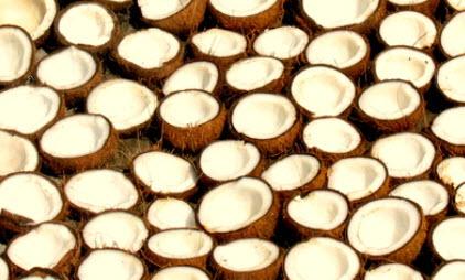 Mitades de coco (crédito: Dan Iserman CC)