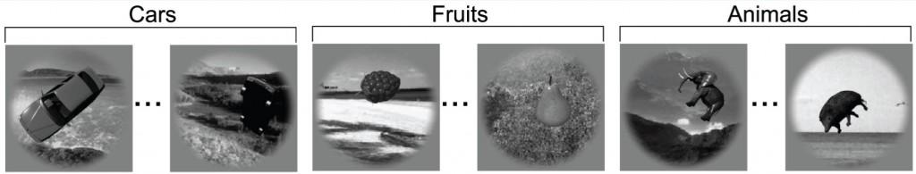 Imágenes de ejemplo de tres de las siete categorías utilizadas en la medición de reconocimiento de categorías de objetos en redes neurales y macacos  (crédito: Cadieu et al./ PLoS Comput Biol).