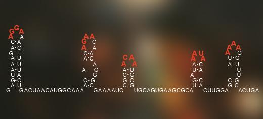 Un código escondido en el arreglo de la información genética de virus de hebra simple RNA le dice al virus como armarse a sí mismo dentro de su propia armazón de proteínas. (Crédito: University of Leeds)