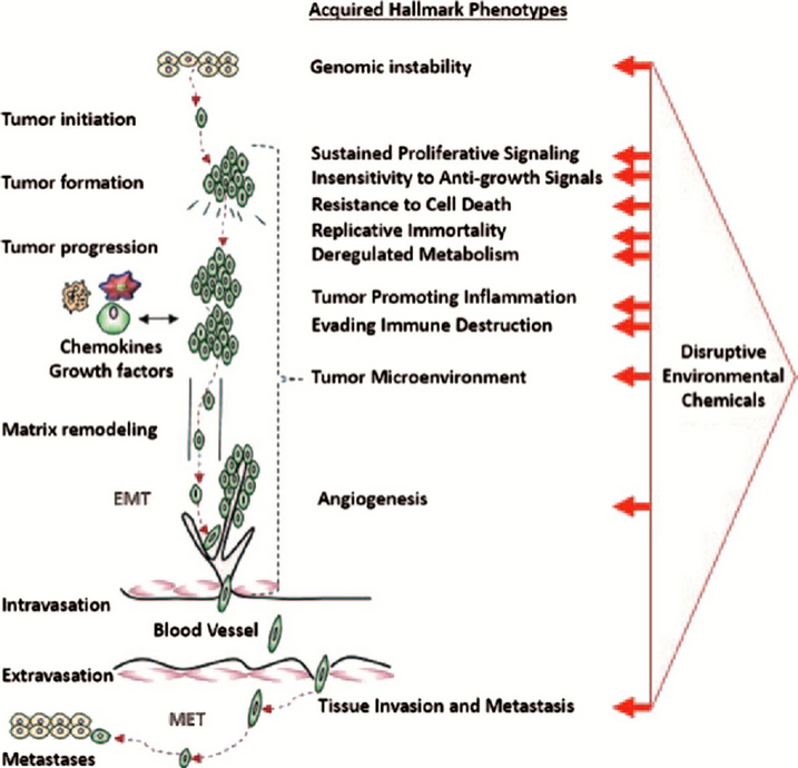 Potencial dañino de la exposición medioambiental a mezclas de químicos en bajas dosis (crédito: William H.Goodson III et al./Carcinogenesis)
