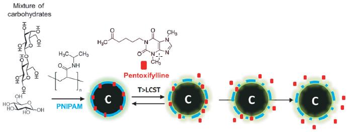 Nanopartículas luminiscentes de carbono (una mezcla de carbohidratos) se utilizaron para suministro controlado de droga. Poly ( N -isopropylacrylamide) (PNIPAM), un polímero termosensitivo, fue elegido para encapsular moléculas de pentoxifylline (en rojo). El PNIPAM pasa por una fase de transición a temperatura más alta, liberando así las moléculas de la droga de una manera controlada.  (Crédito: P. Mukherjee et al./Small)