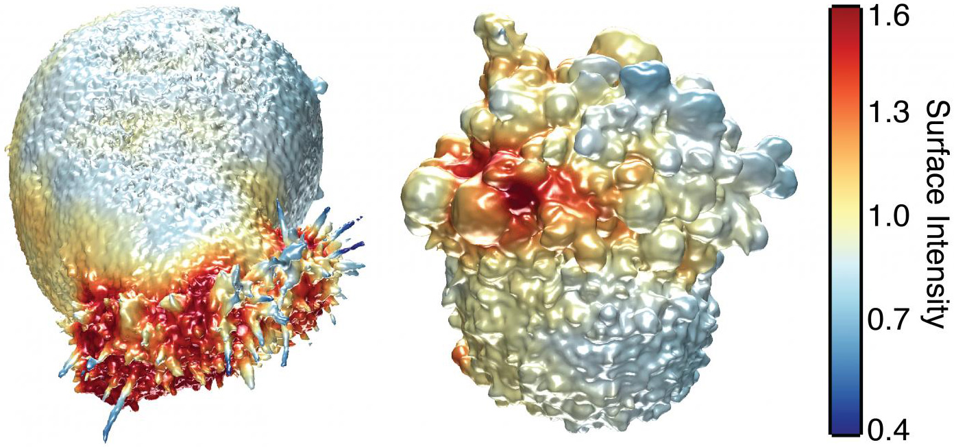 Células cancerígenas en 3D