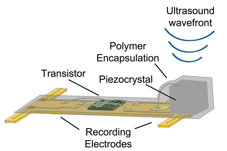 El diagrama muestra los componentes de una mota de polvo neural (sensor). El dispositivo está cubierto por completo de un gel biocompatible. (crédito: Dongjin Seo et al./Neuron)
