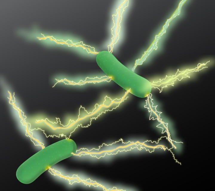 """Microbiólogos hacen gran avance en el desarrollo de electrónica """"verde"""""""
