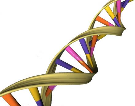 Descubren código secuencial genético preciso que habilita genes