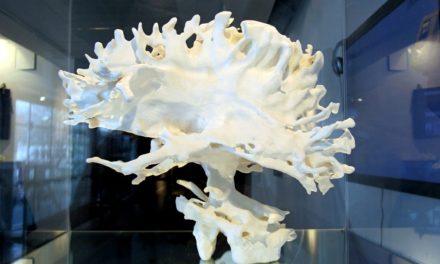 El cerebro: se requiere un cambio radical en nuestro pensamiento para entenderlo